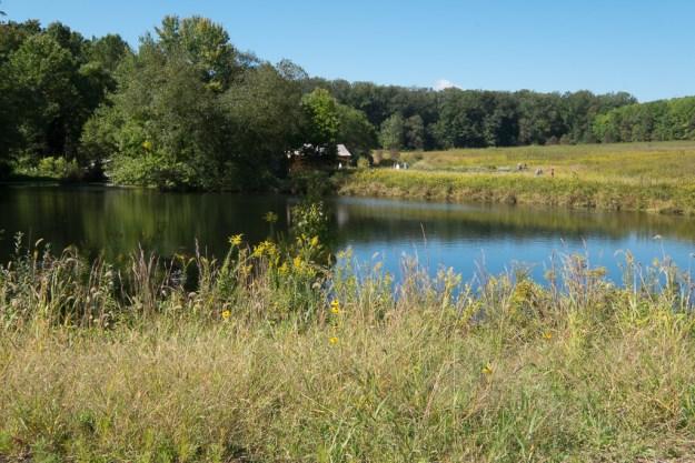 140930_Longwood Meadow #4b by .