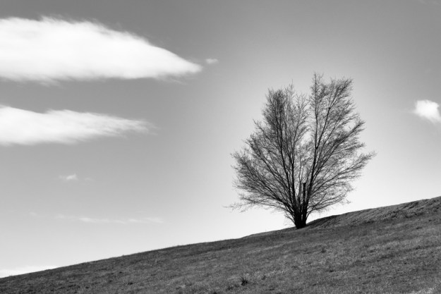 160328_Lonesome Tree