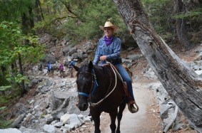 A horse-rider on the trail