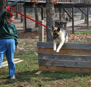 Obedience and Canine Good Citizen Class at Keystone German Shepherds & Kennels