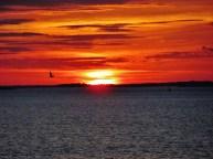 Sunset Bird