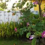 アカバナハカマノキ 花の姿