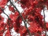 モンキーフラワーツリー 花のアップ