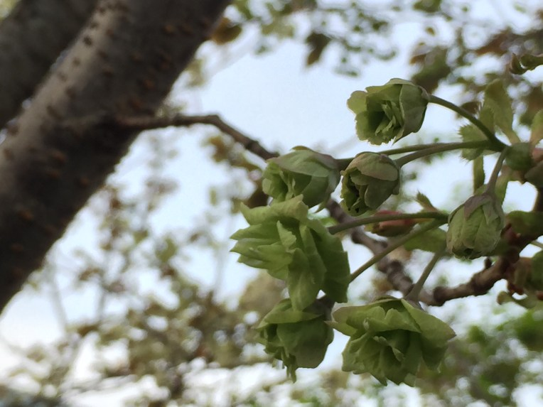 ひっそりと満開の花