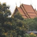 寺院とコウエンボク