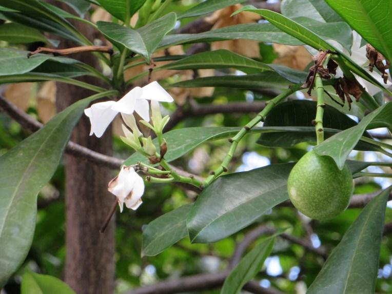 Suicide tree/ Oomi-hukuragi