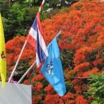 タイの国旗とホウオウボク