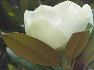 開き始めの若い花