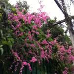 見事な花の姿