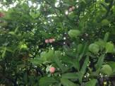 実と木の様子