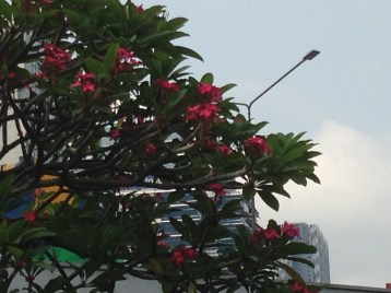 キョウチクトウ 赤花の姿