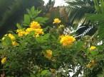 密集した花
