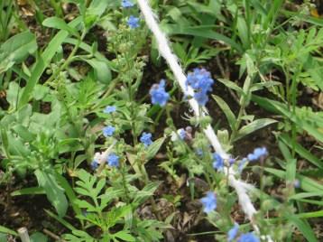 花と草の姿