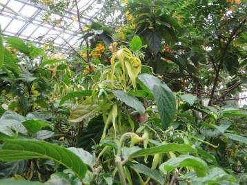 花と植物の姿