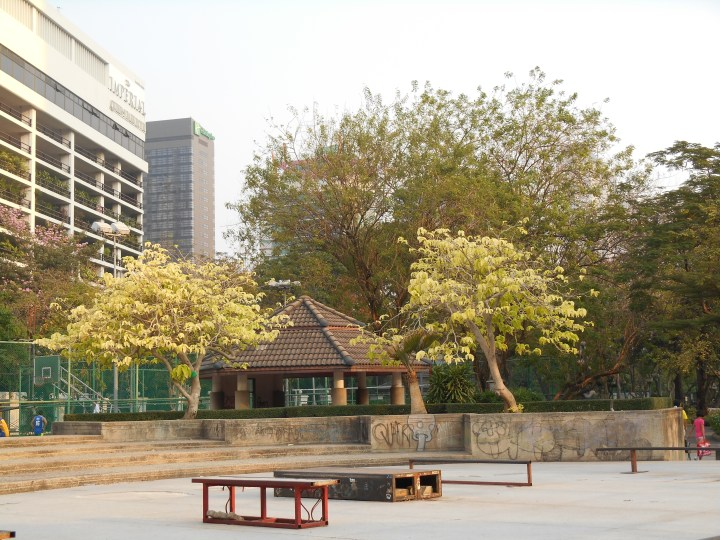 公園の中の様子