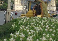 道の分離帯に植えられた花