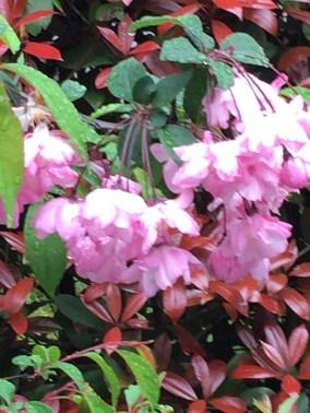 垂れ下がる花の姿