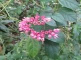 白い蕾から赤い花の出てくる様子