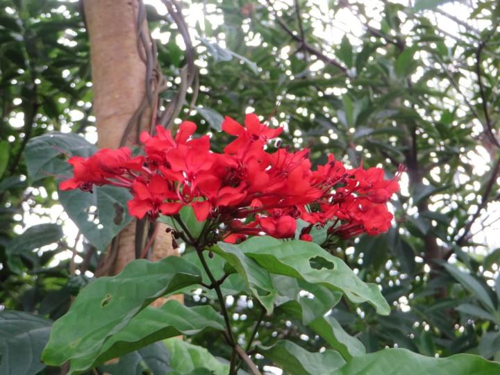 咲き出た赤い花の様子