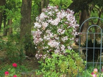 ハゴロモジャスミン きれいに仕立てられた花