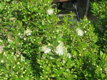 花のついた植物全体の様子