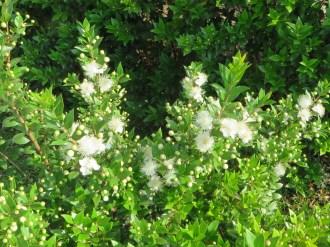花のついた植物の様子