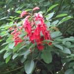 アメリカディエゴ 花と枝の様子