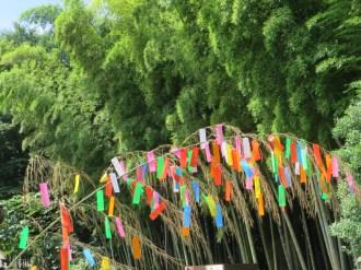 七夕飾りと竹林