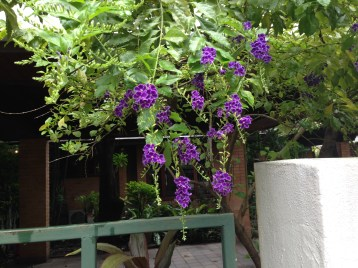 Flower of Golden dewdrop タイワンレンギョウ