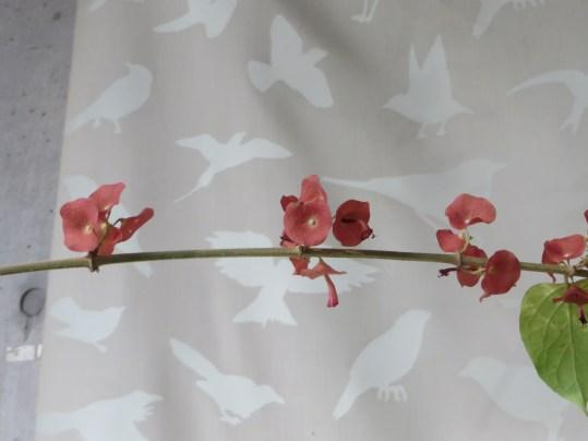 チャイニーズハット 花の様子