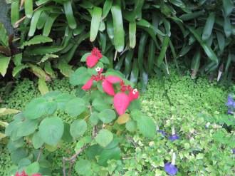 ヒゴロモコンロンカの木の様子