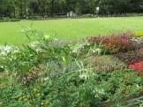 フウセントウワタの草の姿