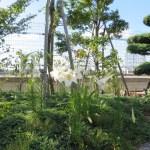 タカサゴユリ 花の姿