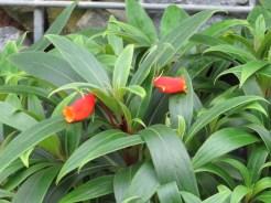 シーマニア 花の姿