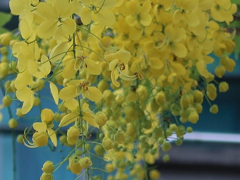 Golden shower/ ゴールデンシャワー