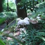 レンゲショウマ 花の姿