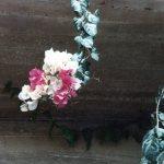 紅白のブーゲンビリアの咲いている様子
