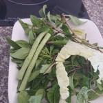 ナギナタコウジュ 麺類の野菜として出されたもの 上側の葉