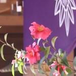 サザンカ 花の咲いている様子