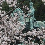 Cherry var. Komatsu-otome/ コマツオトメ 原木 花の咲いている様子、小松宮彰仁親王の像の前