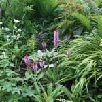Vial's primrose/ プリムラビアリー 花の咲いている様子