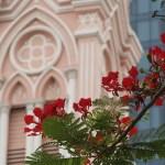 Flame tree/ ホウオウボク ダナン大聖堂をバックに