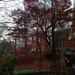 紅葉した北大植物園入口