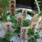 Oenanthe javanica/ Japanese parsley/ セリ