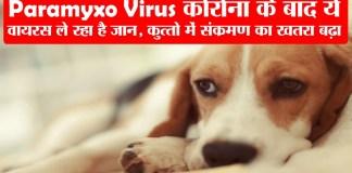Paramyxo-Virus-पैरामिग्जो-वायरस