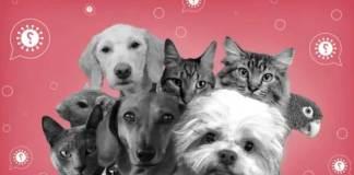 pet-also-need-corona-vaccin