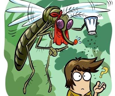 Làm gì khi bắt được muỗi