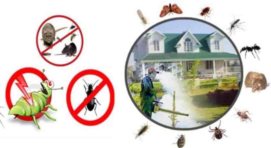أفضل شركات مكافحة الحشرات بالرياض