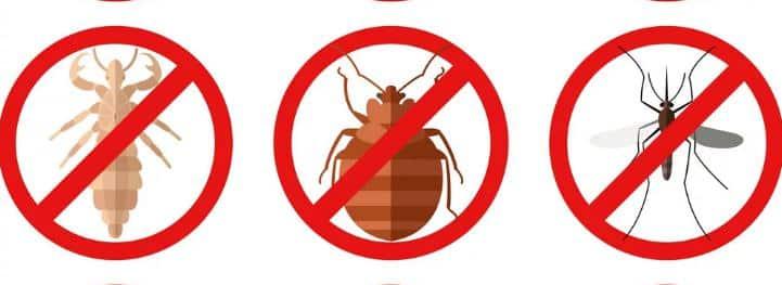 شركات رش مبيدات الحشرات بجدة