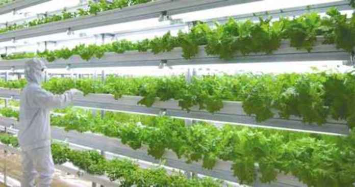 Emirates Airline partners with Crop One to Develop World's Largest Vertical Farm
